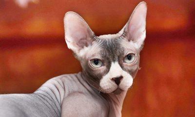 Кошка GRAFINYA