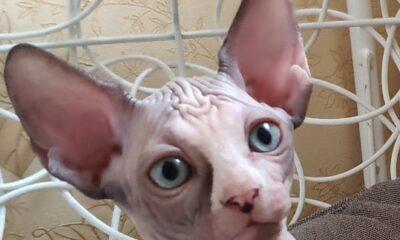 Котенок Mary